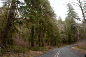 The forested road