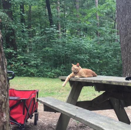 Camping Cat
