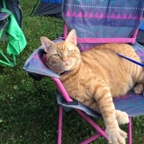 I'm Camp Chair Cat