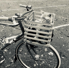 Bike Basket Cat