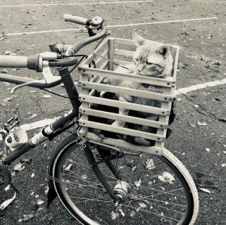 Bike Basket Cat