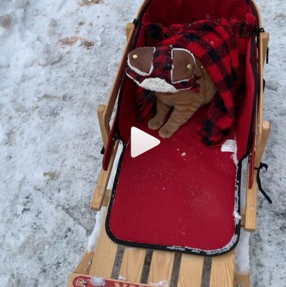 My winter sled