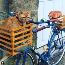 This is me in bike bike basket