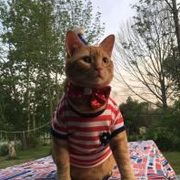 I was feeling patriotic